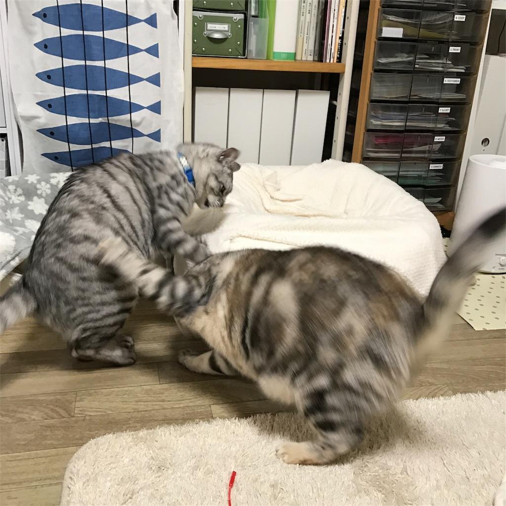 f:id:kissaneko:20170307223714j:image