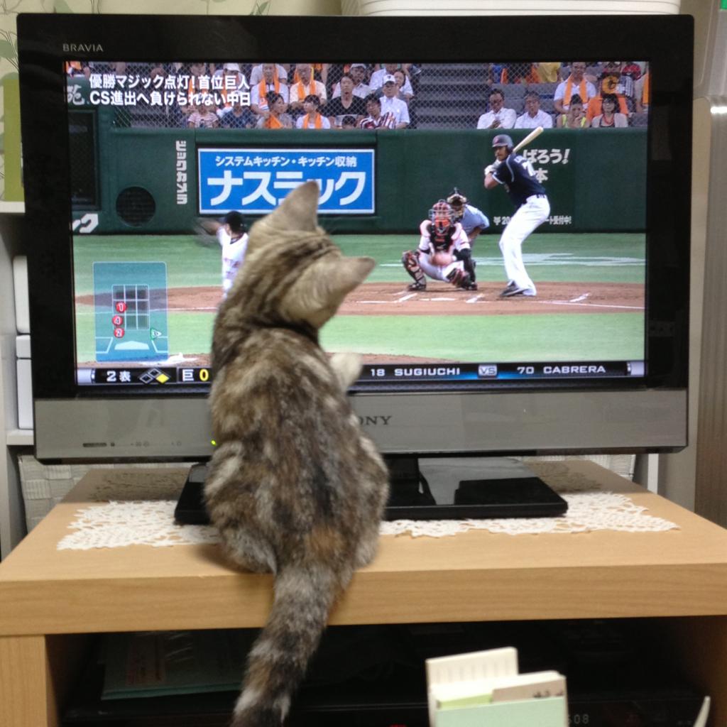 f:id:kissaneko:20170313001431j:plain