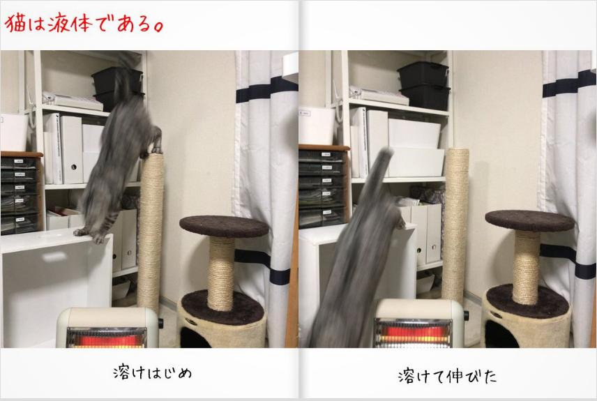f:id:kissaneko:20171228033400p:plain