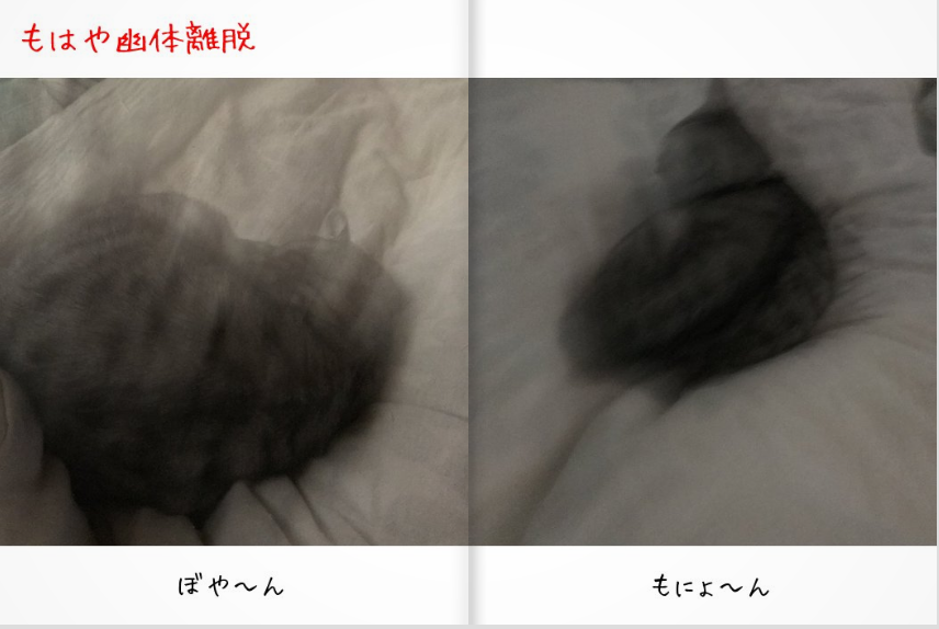 f:id:kissaneko:20171228033419p:plain