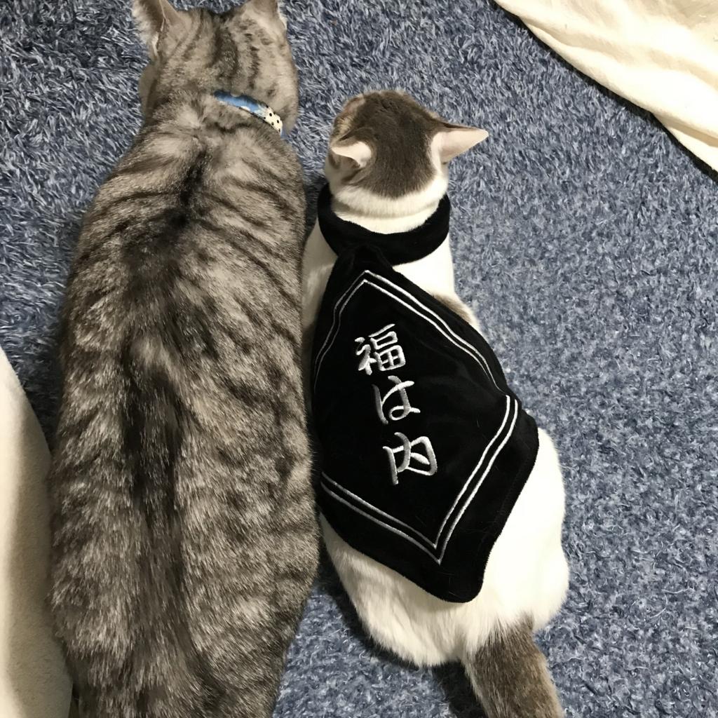 f:id:kissaneko:20180202054227j:plain
