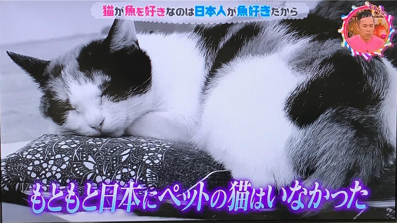 もともと日本に猫はいなかった
