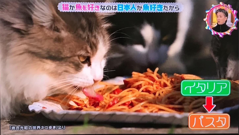 イタリアの猫 パスタ