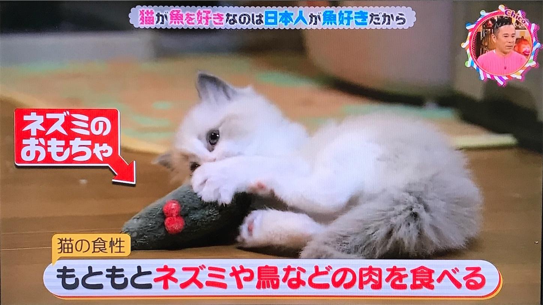 猫はもともと肉食動物