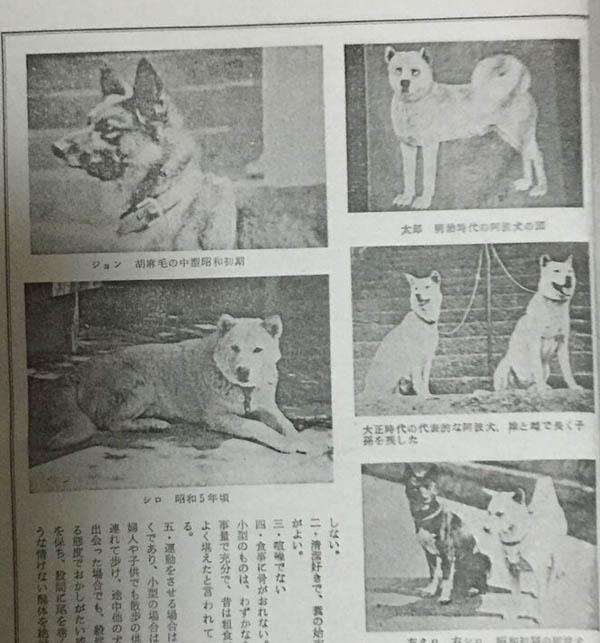 f:id:kisyu-inu:20160917170659j:plain