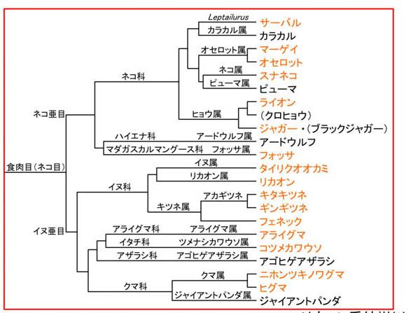 f:id:kisyu-inu:20171005091639j:plain