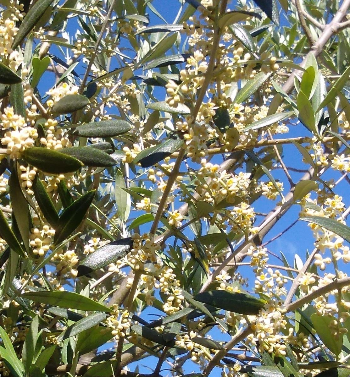 f:id:kitaawaji-olive:20200522120002j:plain
