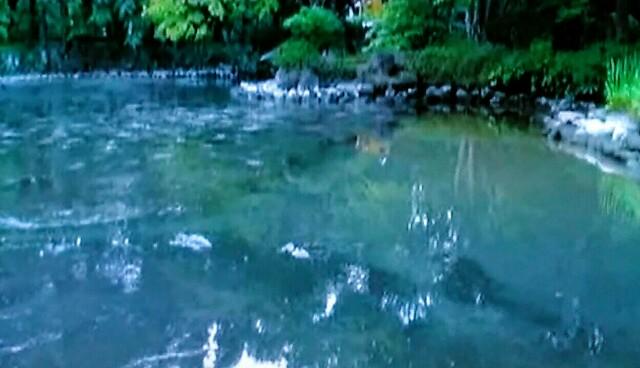 f:id:kitafumi:20170908133633j:image