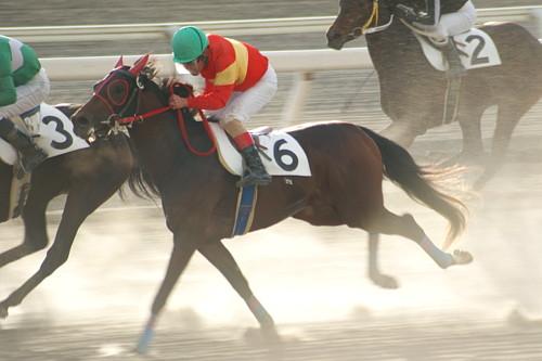 f:id:kitagawa-stable:20101103014459j:image