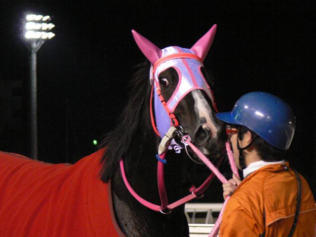 f:id:kitagawa-stable:20101103021043j:image