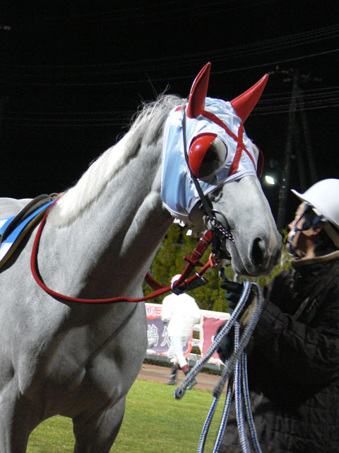 f:id:kitagawa-stable:20101103021452j:image