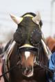 f:id:kitagawa-stable:20110513184703j:image:medium