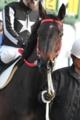 f:id:kitagawa-stable:20110513185018j:image:medium