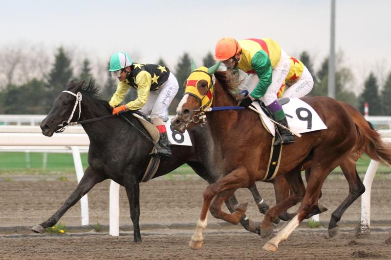 f:id:kitagawa-stable:20130522235123j:image