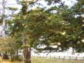 クリスマスツリー風1