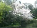 椿山荘20120409-1