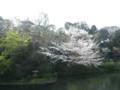 椿山荘20120409-2