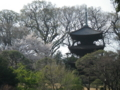 椿山荘20120409-3