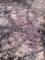 桜20120415