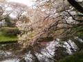 小石川植物園2