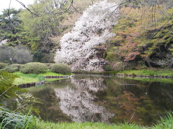 小石川植物園3