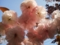 八重桜20120424-2