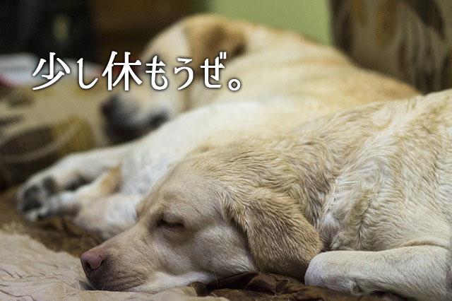 f:id:kitahana_tarosuke:20170830011155j:plain