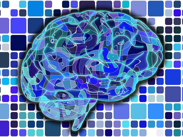 脳のイメージイラスト