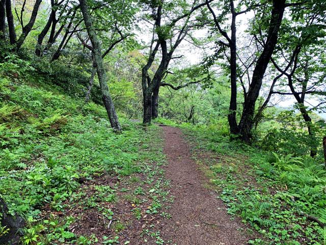 土の遊歩道