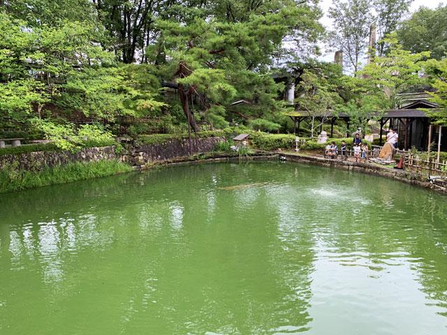 博石館 森の池
