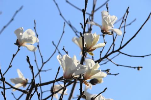 式子内親王と藤原定家の梅の歌」に想うこと - kitahira blog