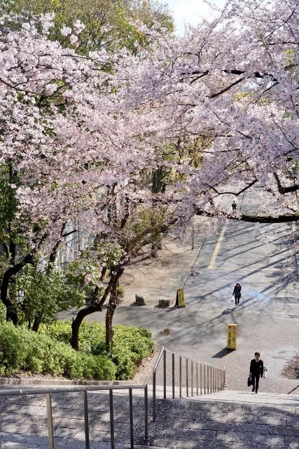 f:id:kitahonami:20190409003649j:image