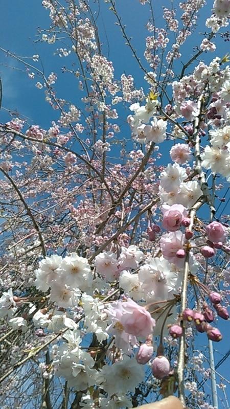 f:id:kitakami_sakura:20190416191959j:plain