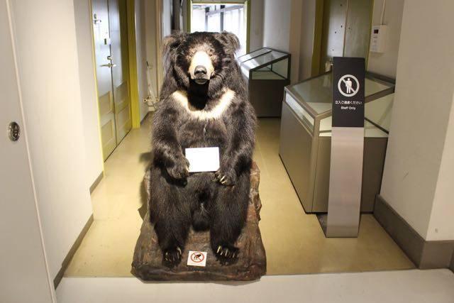 北海道大学総合博物館 クマ