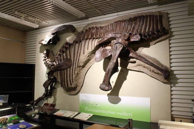 北海道大学総合博物館 恐竜