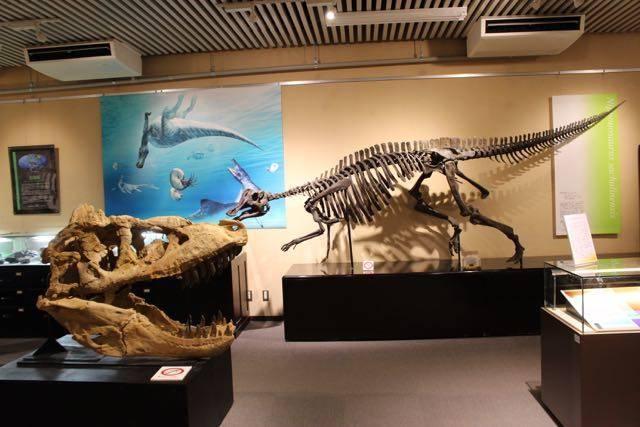 北海道大学総合博物館 恐竜展示