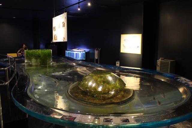 サケのふるさと千歳水族館 タッチプール