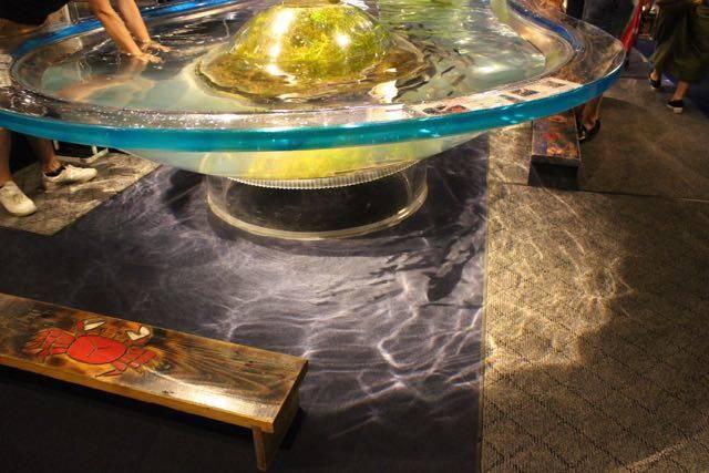 サケのふるさと千歳水族館、タッチプール光