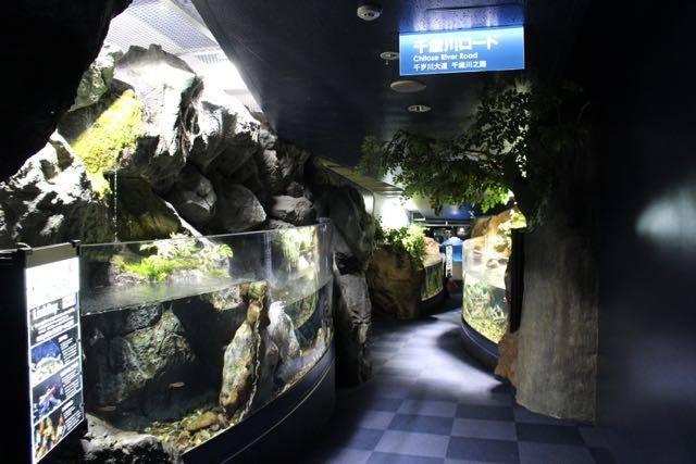 サケのふるさと千歳水族館 千歳川ロード