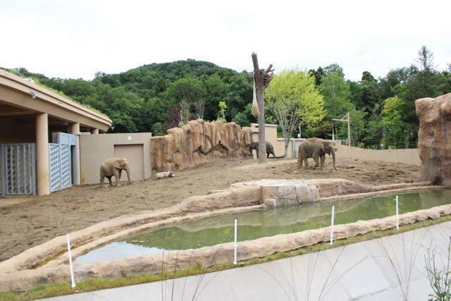 札幌円山動物園 ゾウ舎屋外