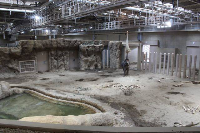 札幌円山動物園 ゾウ舎 屋内