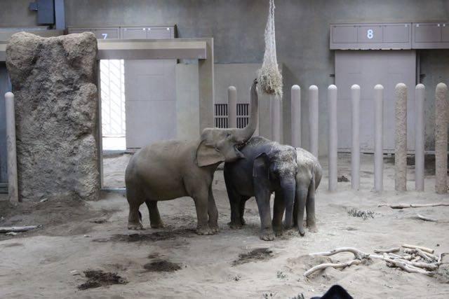 札幌円山動物園 ゾウ舎 屋内餌
