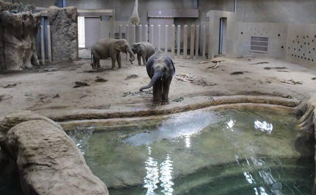 札幌円山動物園 ゾウ 水遊び