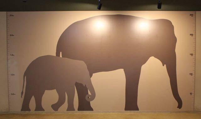 札幌円山動物園 ゾウ 背比べ