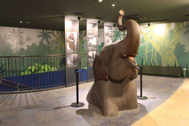 札幌円山動物園 ゾウの頭