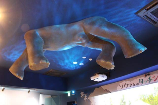 札幌円山動物園 ゾウの足
