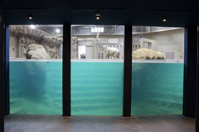 札幌円山動物園 水のステージ