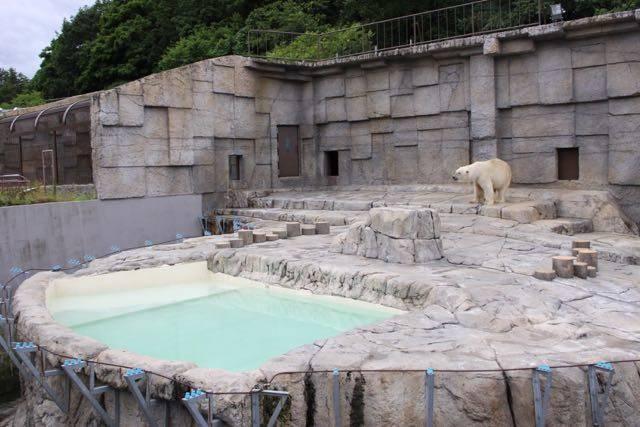 円山動物園 ホッキョクグマ サブ放飼場