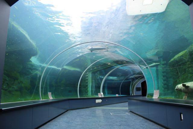 円山動物園 ホッキョクグマ館 水中トンネル