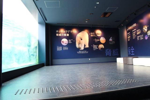 円山動物園 ホッキョクグマ 室内観察窓